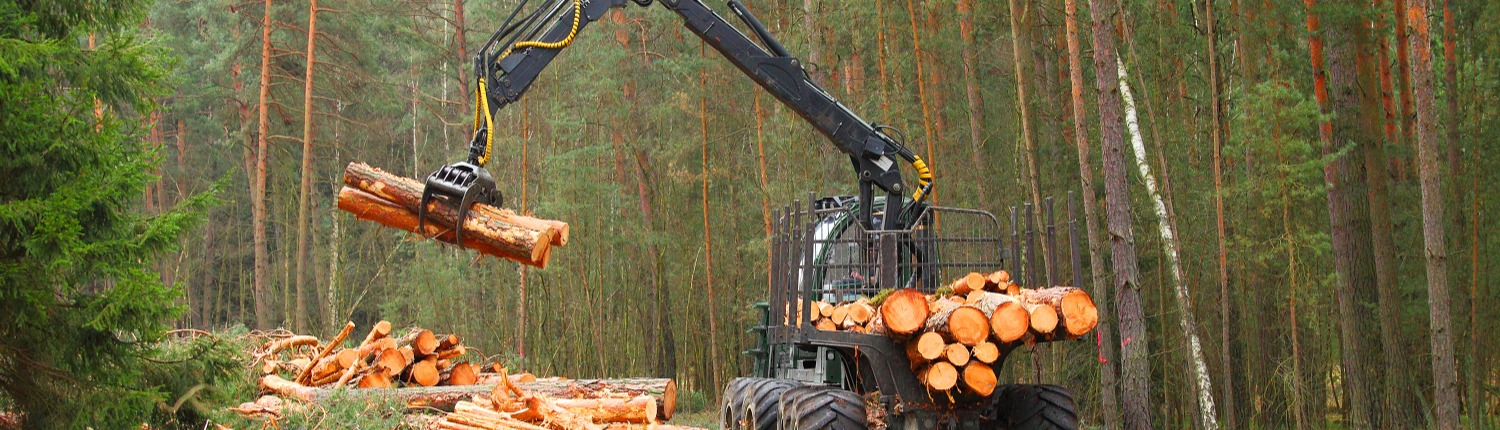 Forestry Equipment Financing